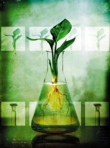 Heal Ventura naturopathy plant flask image